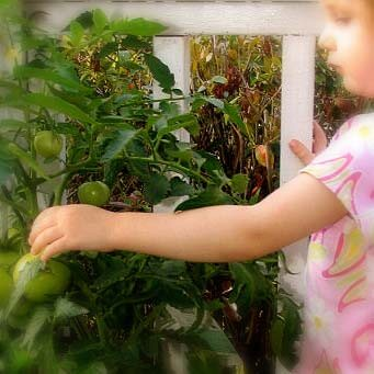 Growing vegetables - small garden