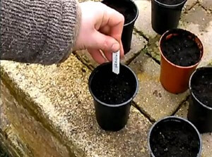 Sowing seeds - a beginners guide