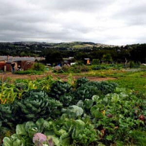 Read more about the article 8 allotment tips