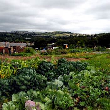 Your Allotment