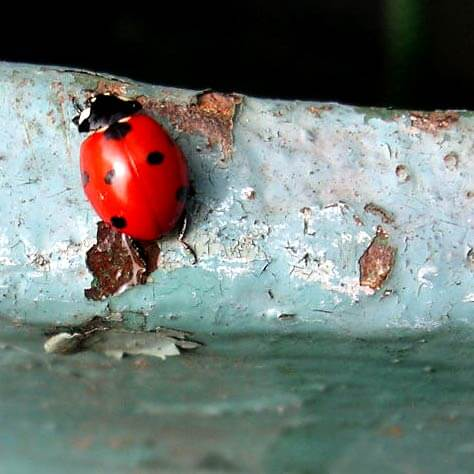 Ladybird - give it a bug box