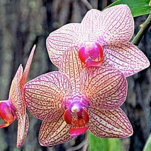 Read more about the article Looking after Orchids