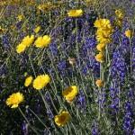 Wild flower garden from seed