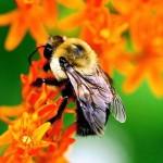 Garden flowers for bees