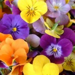 Frost hardy bedding plants