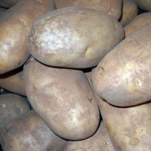 A guide to chitting & growing Potatoes