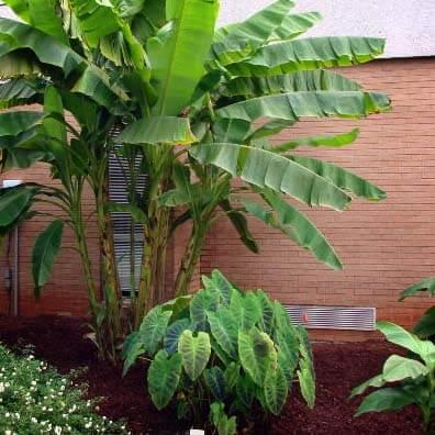Exotic garden plants