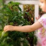 Small garden vegetables