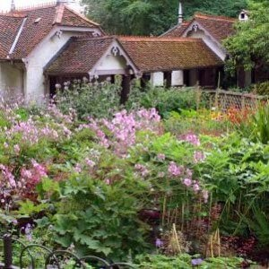 Plants for a cottage garden
