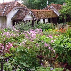 Cottage garden plants