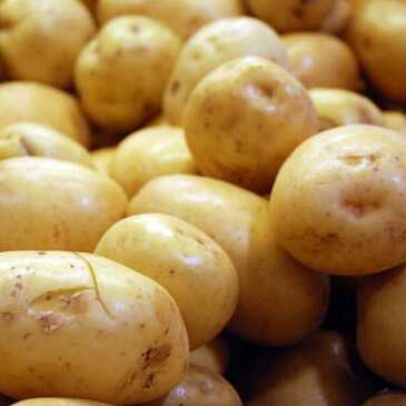Avoid potato blight oraganically