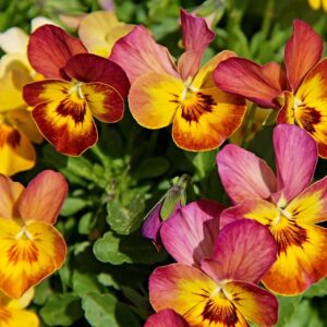 Read more about the article Frost hardy bedding plants