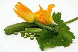 Mildew resistant Courgettes varieties