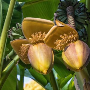 Read more about the article Tropical garden flowers